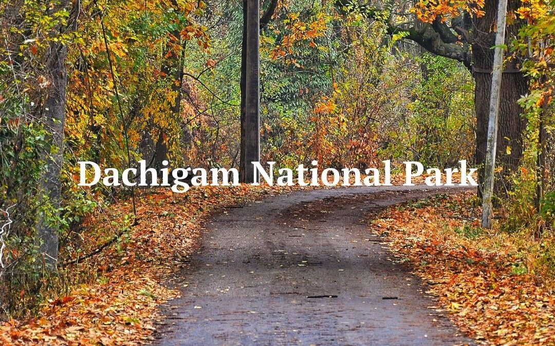 A-Z Guide on the Dachigam National Park