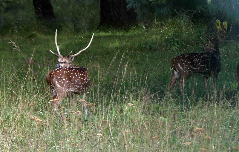 A-Z Guide on the Dachigam National Park 3