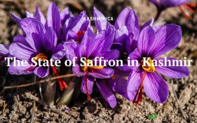 The State of Saffron in Kashmir